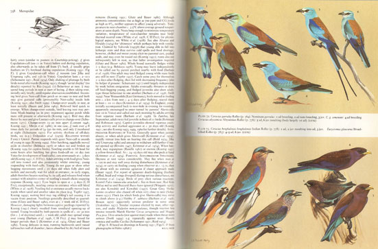 handbook of the birds of europe the middle east and north africa rh andrewisles com Birds of North America Birds of North America