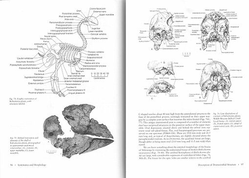 Magnificent mihirungs: the colossal flightless birds of