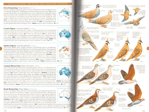 field guide to australian birds michael morcombe reprint rh andrewisles com Birds of California Identification Guide Birds of North America Identification