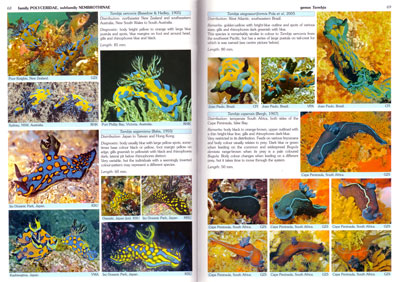 nudibranchs of the world helmut debelius rudie h kuiter