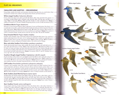 Field guide to the birds of trinidad and tobago by martyn kenefick.