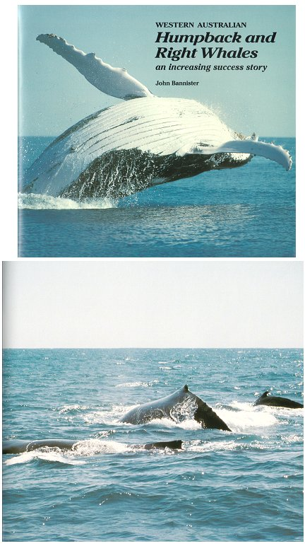 Western Australian Humpback and Right Whales: an increasing success story. John Bannister.