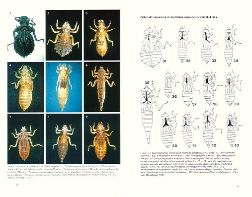 Preliminary keys for the identification of larvae of the Australian Gomphides (Odonata). Gunther Theischinger.