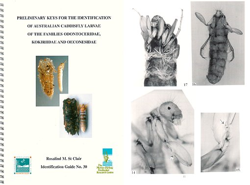 Preliminary keys for the identification of Australian caddisfly larvae of the families Odontoceridae, Kokiriidae and Oeconesidae. Rosalind M. St. Clair.
