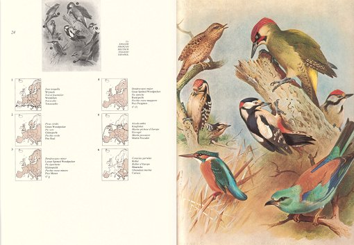 Thorburn's atlas of European birds. Georges Thalmann.