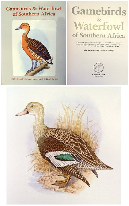 Gamebirds and waterfowl of southern Africa: a collection of 68 water-colours by C. G. Finch-Davies, originally commissioned to illustrate Lt.-Col. Boyd Robert Horsbrugh's 1912 volume The Game-Birds and Water-Fowl of South Africa. C. G. Finch-Davies.