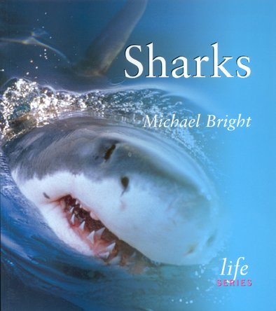 Sharks. Michael Bright.