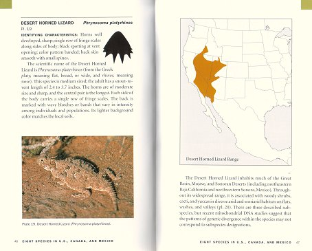 Introduction to horned lizards of North America. Wade C. Sherbrooke.