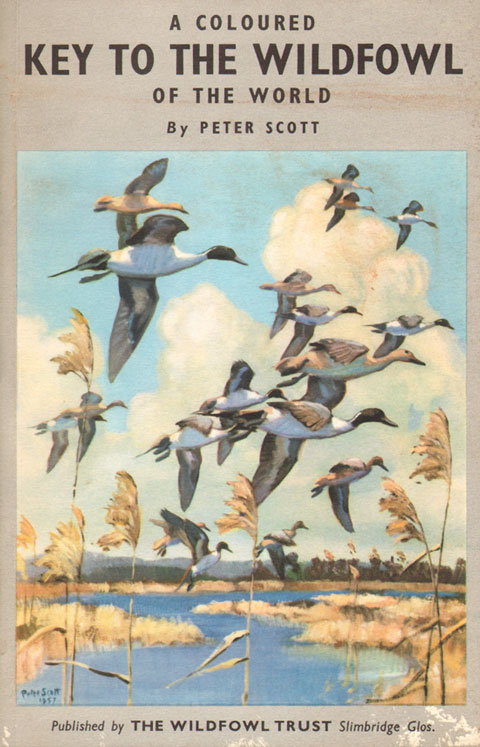 A coloured key to the wildfowl of the world. Peter Scott.