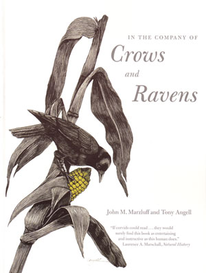 In the company of Crows and Ravens. John M. Marzluff, Tony Angell.