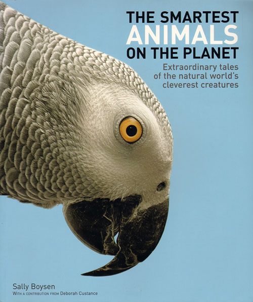 Smartest animals on the planet: extraordinary tales of the natural world's cleverest creatures. Sally Boysen.