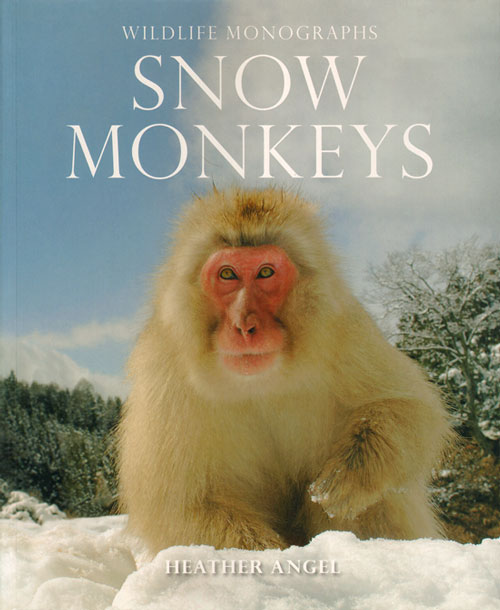 Snow monkeys: the gentle giants of the forest. Heather Angel.