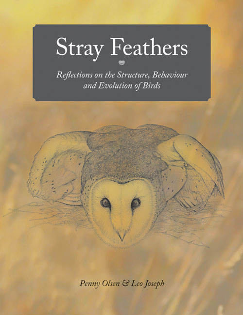 Stray feathers: reflections on the structure, behaviour and evolution of birds. Penny Olsen, Leo Joseph.