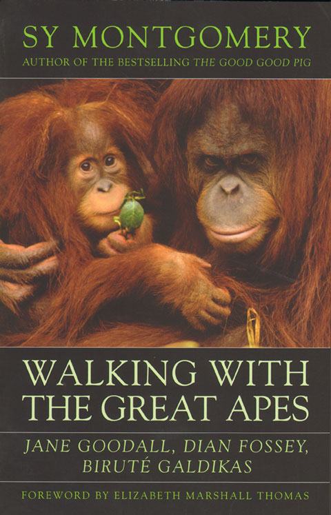 Walking with the great apes. Sy Montgomery.