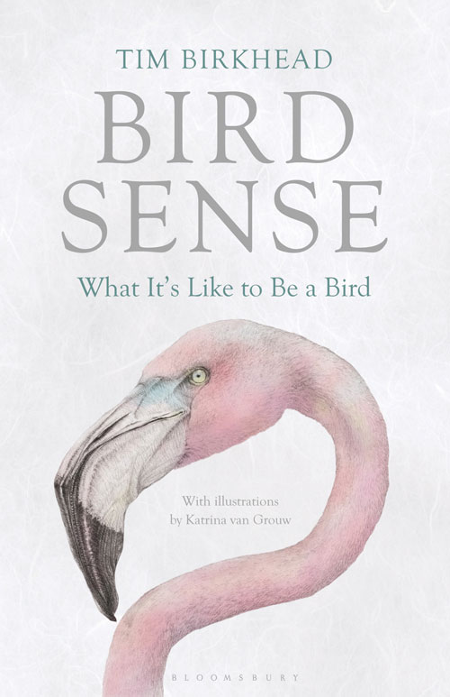Bird sense: what it's like to be a bird. Tim Birkhead.