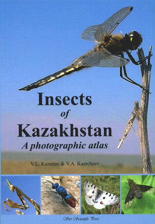 Insects of Kazakhstan: a photographic atlas. V. L. Kazenas, V A. Kastcheev.