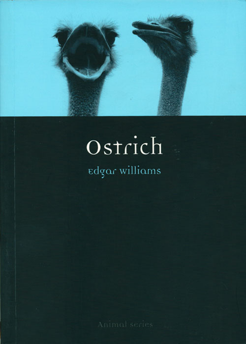 Ostrich. Edgar Williams.