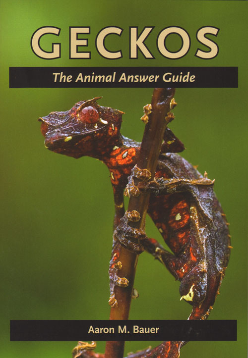 Geckos: the animal answer guide. Aaron M. Bauer.