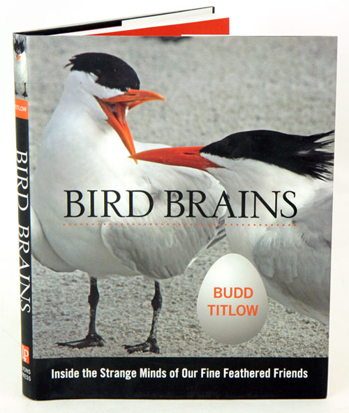 Bird brains: inside the strange minds of our fine feathered friends. Budd Titlow.