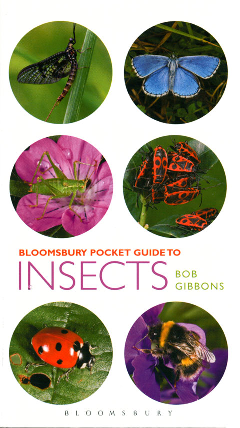 Bloomsbury pocket guide to insects. Bob Gibbons.