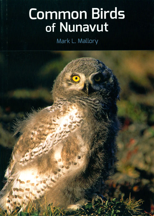 Common birds of Nunavut. Mark L. Mallory.