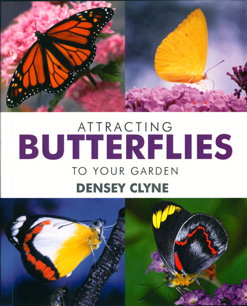 Attracting butterflies to your garden. Densey Clyne.