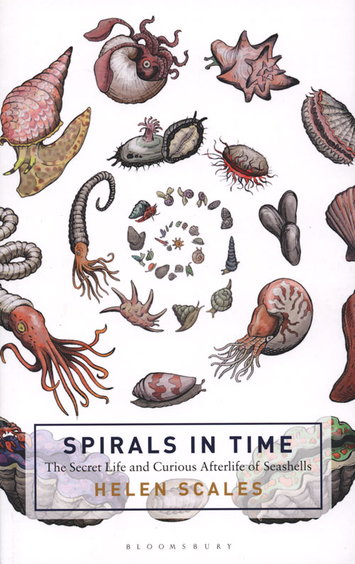 Spirals in time: the secret life and curious afterlife of seashells. Helen Scales.