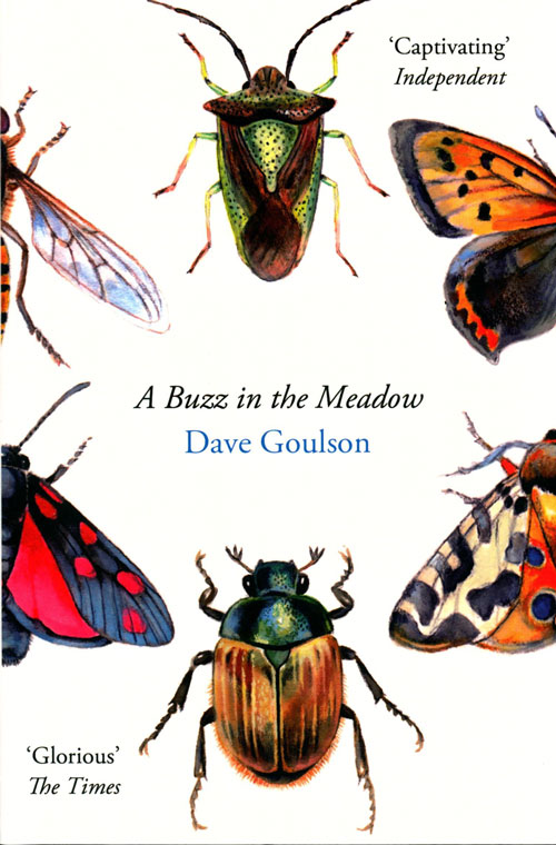 A buzz in the meadow. Dave Goulson.