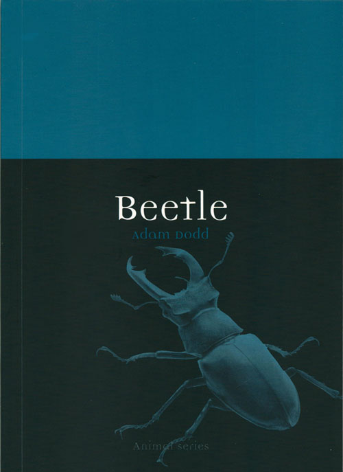 Beetle. Adam Dodd.