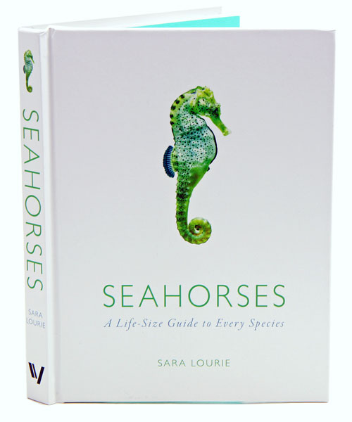 Seahorses: a life-size guide to every species. Sara Lourie.