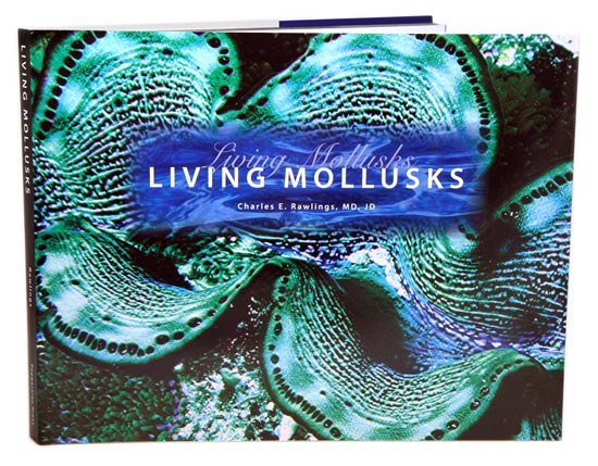 Living mollusks. Charles E. Rawlings.