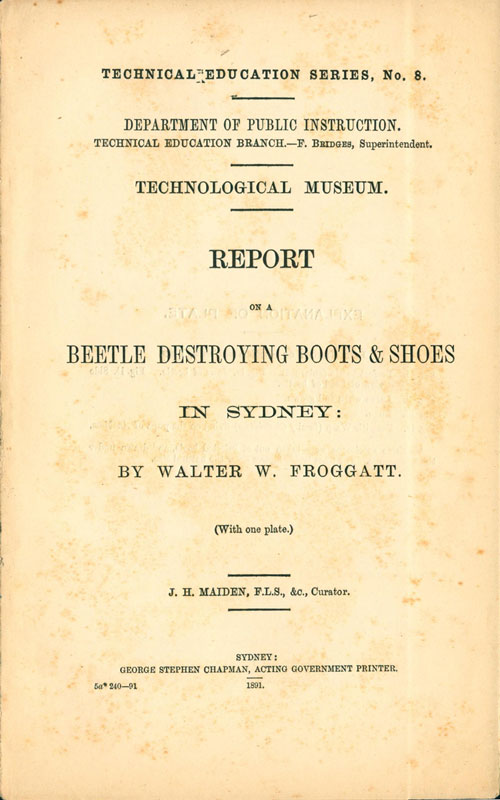 Beetle destroying boots and shoes in Sydney. Walter W. Froggatt.