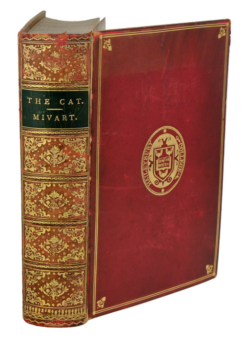 The cat. An introduction to the study of backboned animals, especially mammals. St George Mivart.