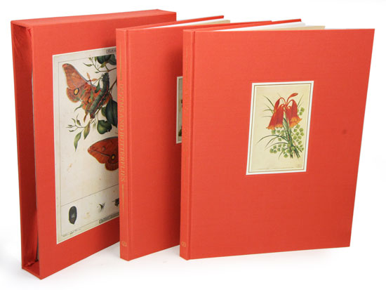 Historical drawings of moths and butterflies [and] Historical drawings of native flowers. Marion Ord.