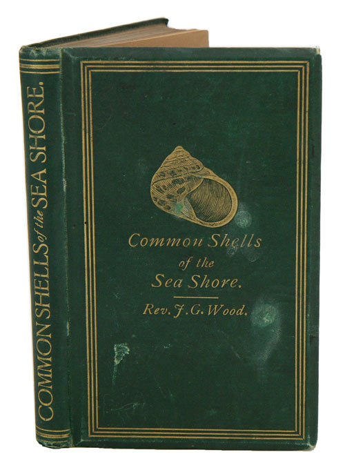 The common shells of the sea-shore. J. G. Wood.