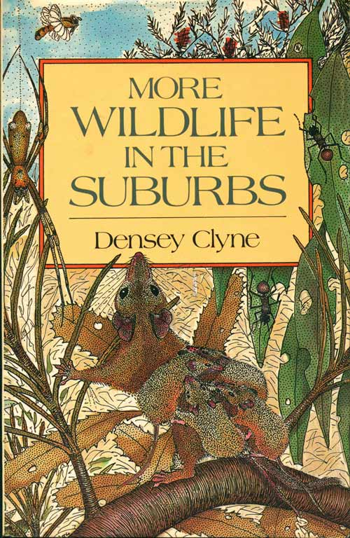 More wildlife in the suburbs. Densey Clyne.
