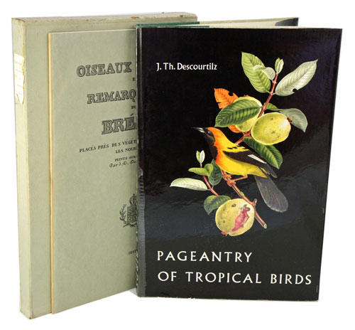 Pageantry of tropical birds. J. Th Descourtilz.
