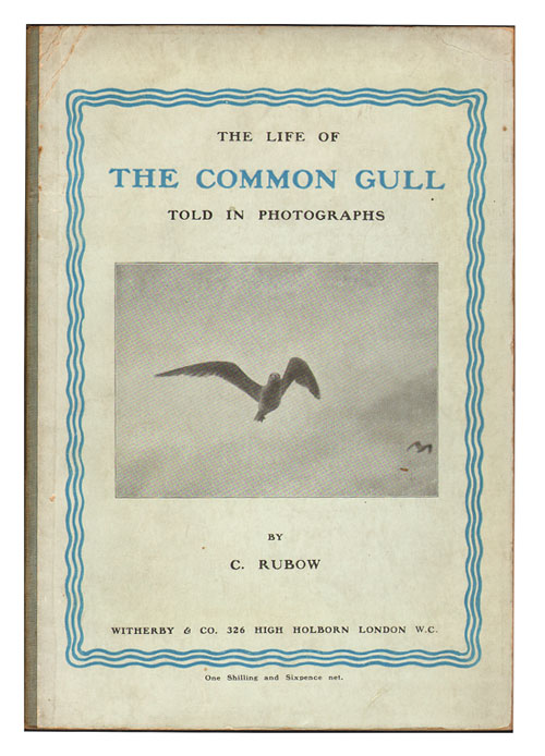 The life of the Common Gull told in photographs. C. Rubow.