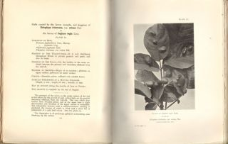 British vegetable galls: an introduction to their study.
