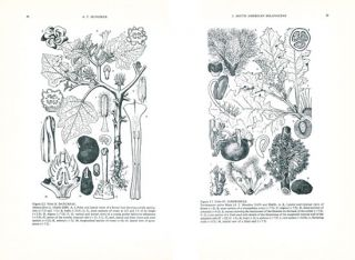 The biology and taxonomy of the Solanaceae