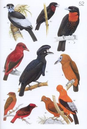 The Birds of South America, volume two: The Suboscine Passerines: Ovenbirds, and woodcreepers, typical and ground antbirds, gnateaters and tapaculos, tyrant flycatchers, cotingas and manakins.