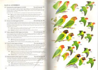 Parrots: a guide to parrots of the world.