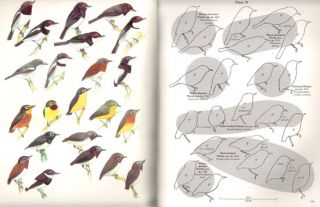 The birds of Africa, volume five: Thrushes to puffback flycatchers.