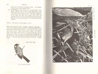 An introduction to Malayan birds.