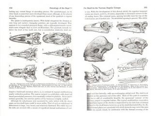 Osteology of the reptiles.