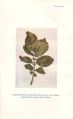 Handbook of fungus diseases of the potato in Australia and their treatment.