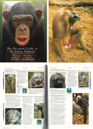 The pictorial guide to the living primates. Noel Rowe