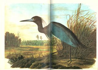 The original water-color paintings by John James Audubon for The Birds of America.