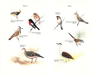Birds and where to watch them in New South Wales.