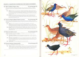 Rails: a guide to the rails, crakes, gallinules and coots of the world.